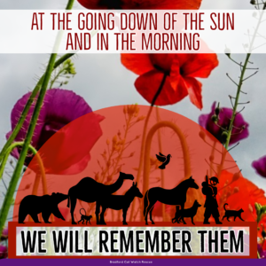 WE WILL REMEMBER THEMThe Purple Poppy - Please join with us and together let's ensure that the animals who lost their lives during this conflict, those lost in Service since, and those who serve us today, are not forgotten but forever remembered alongside their human counterparts. The purple poppy is a remembrance poppy for all the animals that were at conflict during the war, they played a big part in protecting and helping our soldiers, including the horses, dogs, cats, pigeons, camel's, donkeys.All Gave Some, Some Gave All.