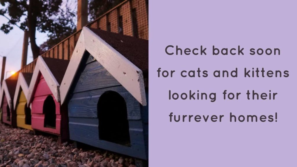 Check back soon for cats and kittens looking for their forever homes!